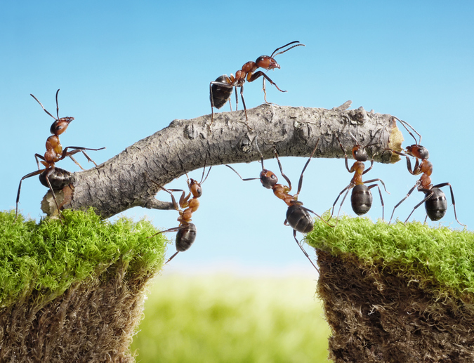 Teamwork. Is everyone on the same Page?